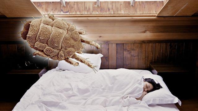 Bettwäsche wechseln: So oft ist das wirklich nötig