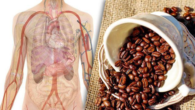 Kaffe kann Leberkrebs vorbeugen