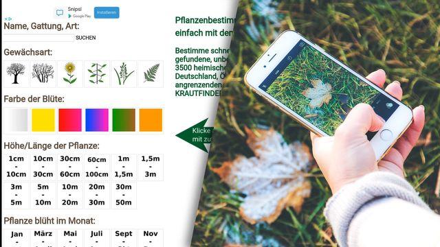 Pflanzen identifizieren via Smartphone mit PlantNet